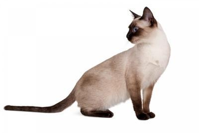 sailor moon cat