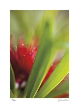 Botanical 1 by Florence Delva
