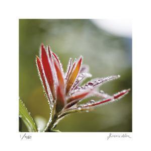 Botanical 2 by Florence Delva