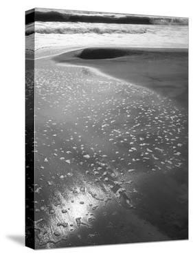 Foam on Sand, Porbandar