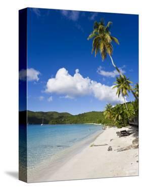 Cinnamon Bay Beach and Palms, St. John, U.S. Virgin Islands, West Indies, Caribbean by Gavin Hellier