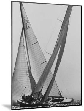 Trial Race For the America's Cup by George Silk