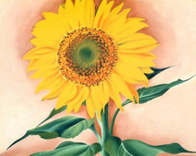 A Sunflower From Maggie 1937Georgia OKeeffe