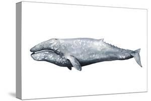 Whale Portrait IV by Grace Popp