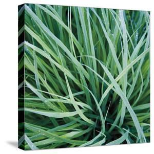 Grass with Morning Dew by Jan Bell