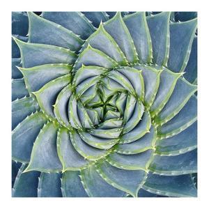 Spiral Succulent by Jan Bell