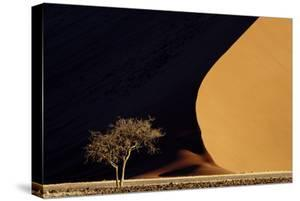 Namibia, Namib-Naukluft Park. Red Sand Dunes Contrast and Tree by Jaynes Gallery