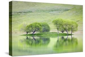 Trees on Island Reflect in Black Butte Reservoir, California, USA by Jaynes Gallery