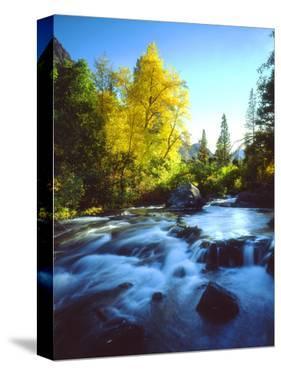 USA, California, Sierra Nevada, Autumn Colors Along a Stream by Jaynes Gallery