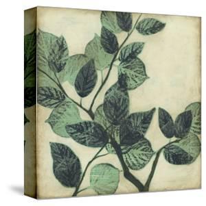 Graphic Leaves II by Jennifer Goldberger