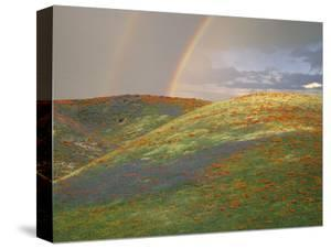 Hills with Poppies and Lupine with Double Rainbow Near Gorman, California, USA by Jim Zuckerman