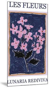 Les Fleurs - Lunaria by Joelle Wehkamp