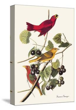 Summer Tanager by John James Audubon