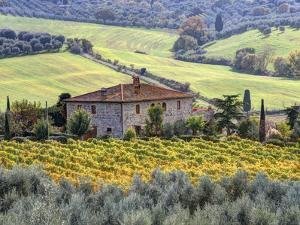 Italy Tuscany Vineyards And Olive Trees In Autumn By A HouseJulie Eggers