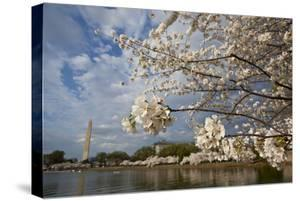 Cherry Blossoms Decorate Trees Around Tidal Basin In Washington DC; Washington Monument Stands Bkgd by Karine Aigner