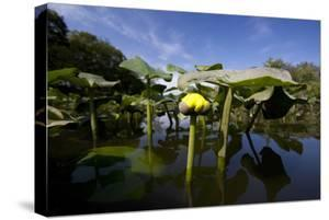 Low Angle Portrait Of A Water Lily Flower In The Waters Of The Blackwater Wildlife Refuge, Maryland by Karine Aigner