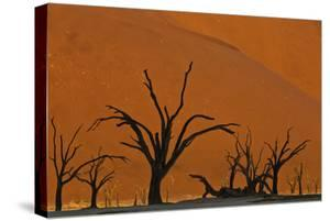 Sun Lights Up Orange Dunes & Silhouette Dread Trees Of Deadvlei Pan, Dunes In Namibia by Karine Aigner