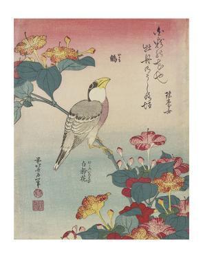 Hawfinch and Marvel-of-Peru by Katsushika Hokusai