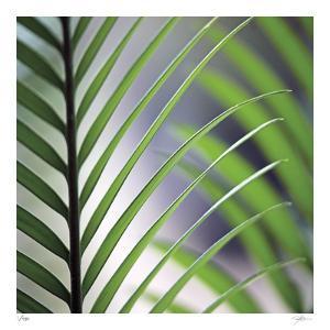Tropical Fan by Ken Bremer