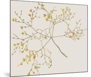 Flourish Whirl by Kristine Hegre