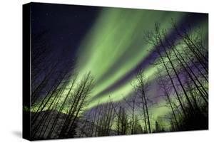 Aurora Borealis XI by Larry Malvin