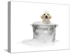 Puppy Taking Bath by Lew Robertson