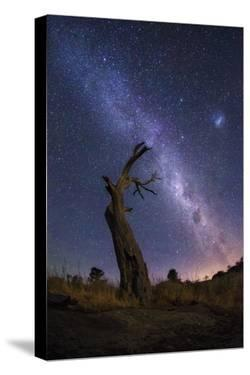 Dead Tree by Lincoln Harrison