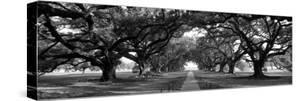 Louisiana, New Orleans, Brick Path Through Alley of Oak Trees
