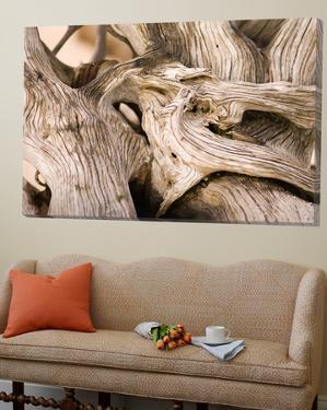Driftwood by Matthew Oldfield