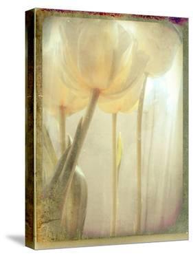 Yellow Flowers by Mia Friedrich