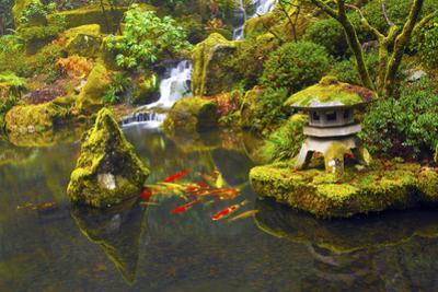 Carp koi posters and prints at for Portland japanese garden koi