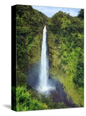 USA, Hawaii, the Big Island, Akaka Falls State Park by Michele Falzone