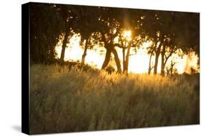Duba Plains Landscape by Michele Westmorland
