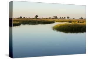 Okavango Delta by Michele Westmorland