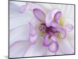 Purple Flower by Michele Westmorland