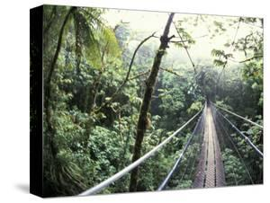 Sky Walk, Monteverde Cloud Forest, Costa Rica by Michele Westmorland
