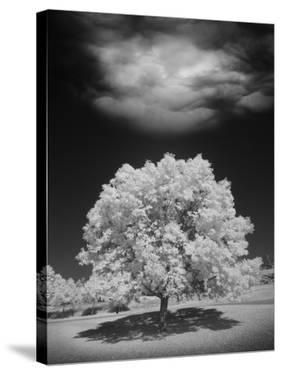 Lone Tree & Cloud, Green Bay, Wisconsin '12 by Monte Nagler
