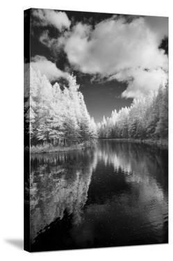 Mirror Of Heaven, Palms Book State Park, Michigan '12 by Monte Nagler