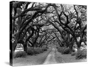 Path In The Oaks #2, Louisiana by Monte Nagler