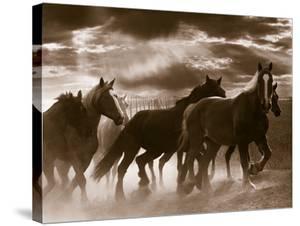 Running Horses And Sunbeams, Rothbury, Michigan by Monte Nagler