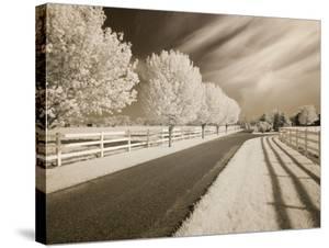 Trees & Shadows, Shipshewana, Indiana '11 by Monte Nagler