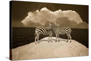 Two Zebras, Port Austin, MI '11 by Monte Nagler