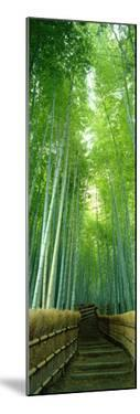 Path Through Bamboo Forest Kyoto Japan