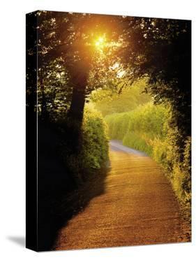 Sunlit Country Lane, Devon, England by Peter Adams