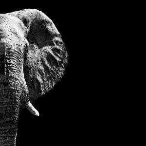 Black & White Elephants