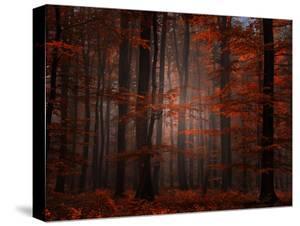 Spiritual Wood by Philippe Sainte-Laudy