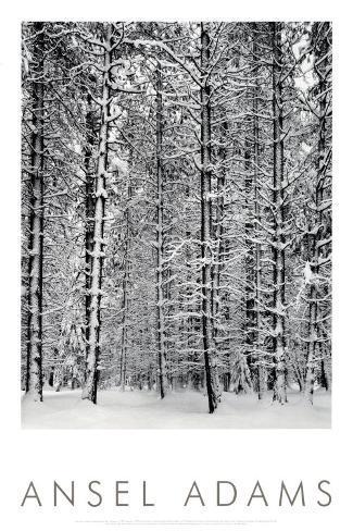 Granskog i snø, Yosemite nasjonalpark, 1932|Pine Forest in Snow, Yosemite National Park, 1932 Kunsttrykk