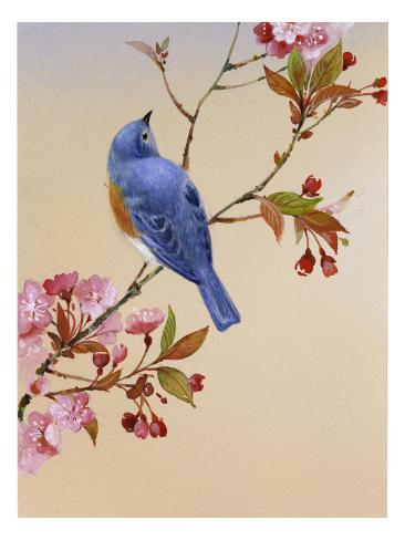 Blå fugl på blomstrende kirsebærgren Wallstickers