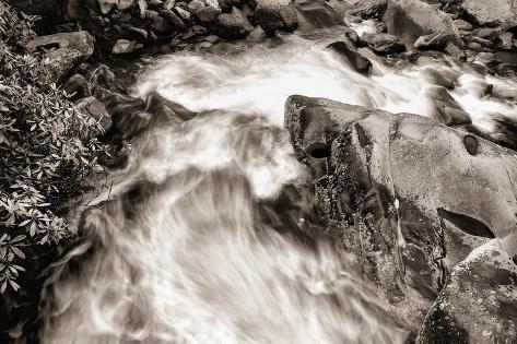 Little Pigeon River BW Fotografisk trykk