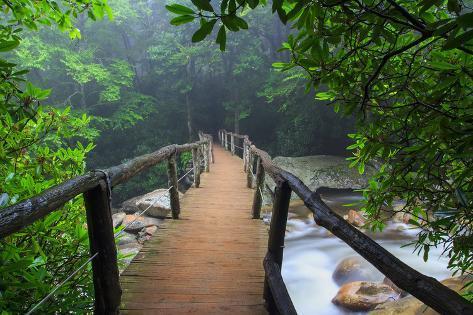 Wooden Bridge in Fog Fotografisk trykk